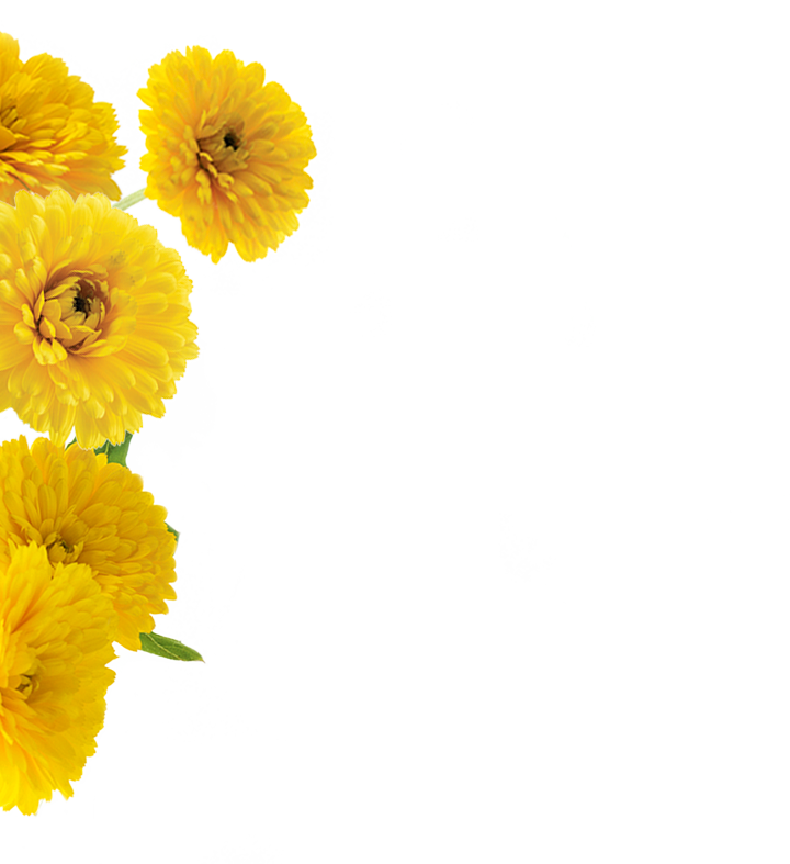 calendula_home_middle-left