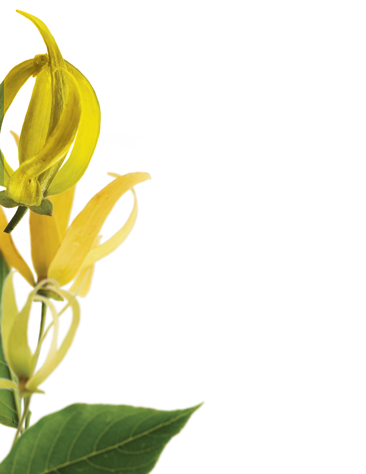 ylang-botanical-left.png